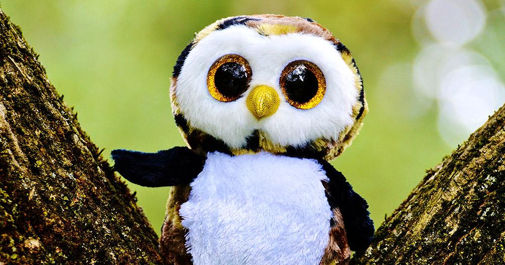 owls-older-wiser-lesbians